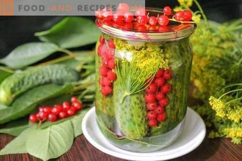 Cucumbers marinated with red currants - all the colors of summer in one can