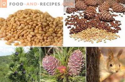 Pine nut - description, properties, use in cooking. Recipes with pine nuts.