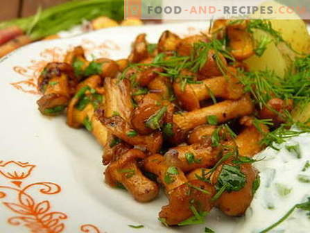 Fried mushrooms - the best recipes. How to properly and cook fried mushrooms.
