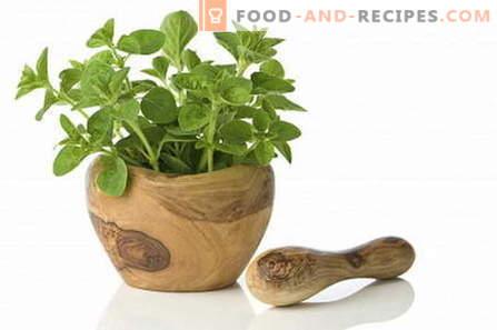 Oregano - description, properties, use in cooking. Recipes with oregano.