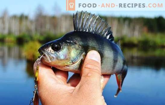 How to clean a perch quickly and efficiently without much effort. How to clean the perch and cut it for soup, frying and roasting