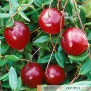 When to pick cranberries
