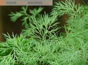 How to freeze dill for the winter