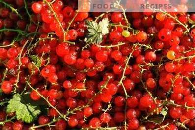 How to store red currants
