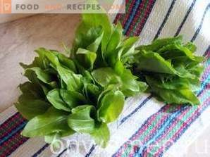 How to freeze sorrel for the winter
