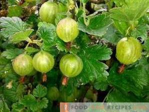 How to freeze gooseberries