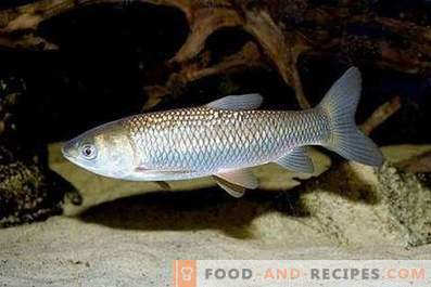 White grass fish: benefit and harm