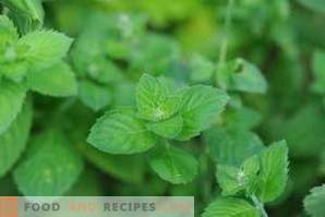 How to freeze mint