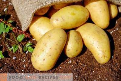 Review of inexpensive means for preseeding preparation of potatoes for diseases and pests
