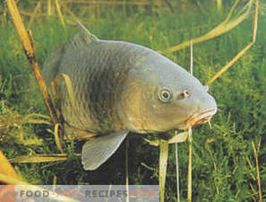 Carp: Benefit and Harm