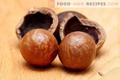 Macadamia Nut: Benefit and Harm