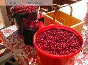 How to store lingonberry