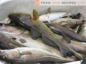 Cod: benefits and harm to the body