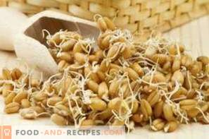 How to germinate wheat