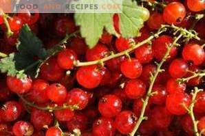 How to freeze red currants