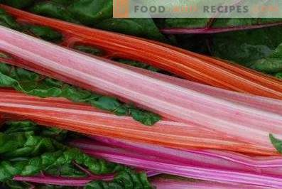 Rhubarb: benefits and harm to the body