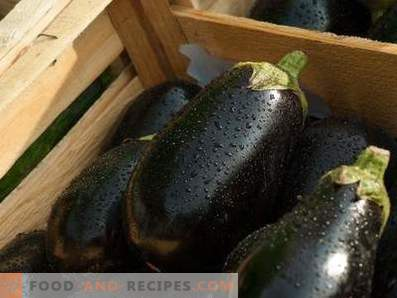 Eggplant: health benefits and harm