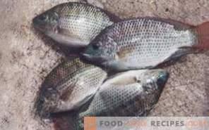 Fish tilapia: benefit and harm