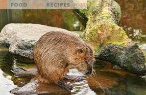 Nutria Meat: Benefit and Harm