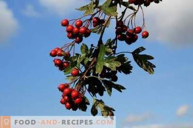 How to store hawthorn