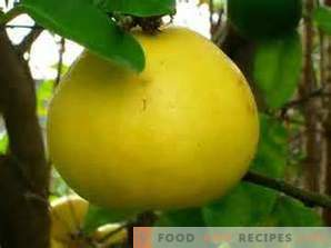 How to choose a pomelo
