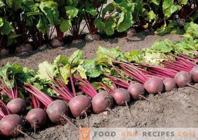 The taste and color is better than no beets!