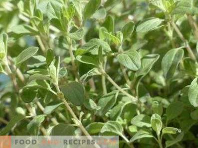 How to store oregano