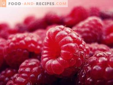 Raspberry: useful properties and contraindications