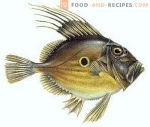 Dori Fish: Benefit and Harm
