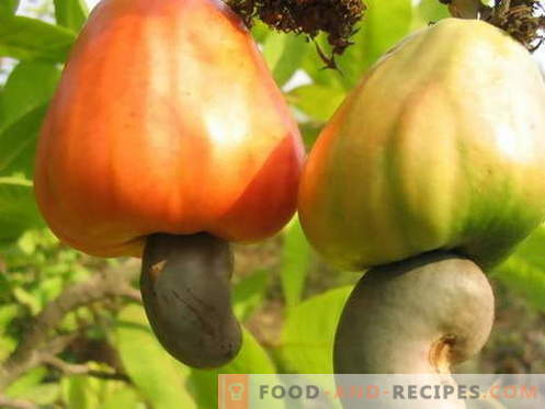 Cashew - useful properties and use in cooking. Recipes with cashews.