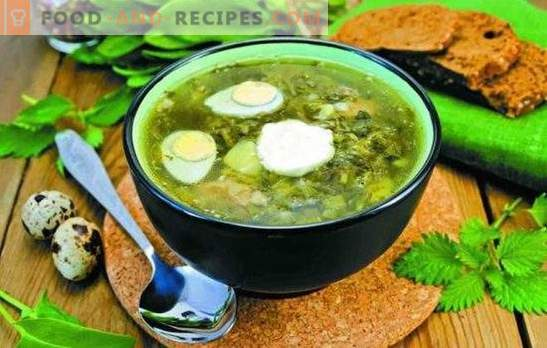 Sorrel soup - quick, fresh, tasty. Simple recipes for sorrel soup without meat, on bone broth, with brisket, on cream