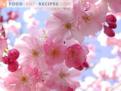 Sakura jam: how to cook