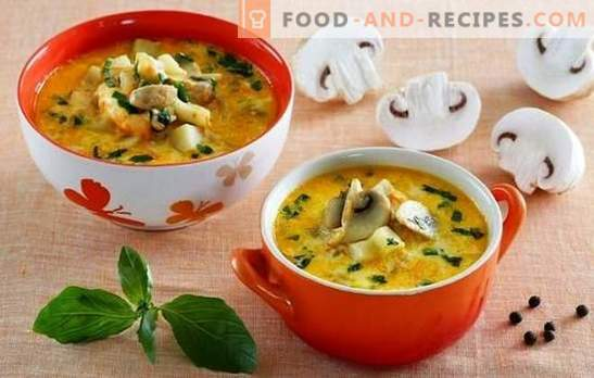 Soup with champignons and cheese - pamper your family! A selection of the best recipes for soup with champignons and melted cheese