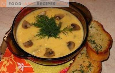 Cheese soup with mushrooms - gently, tasty, satisfying. Recipes best cheese soups with mushrooms and chicken, vegetables and smoked