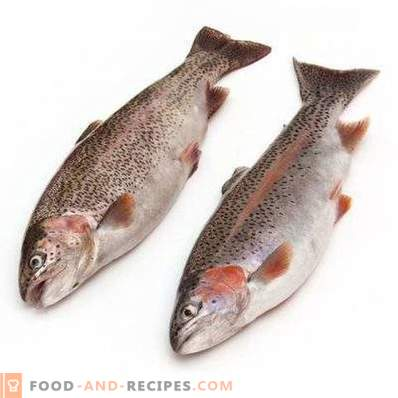 Trout: benefits and harm to the body