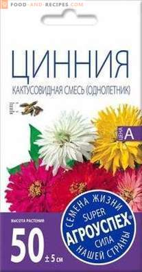 Zinnia - the best varieties and cultivation features
