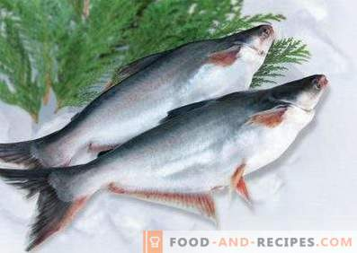Pangasius: Benefit and Harm